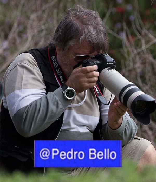 Pedro S Bello